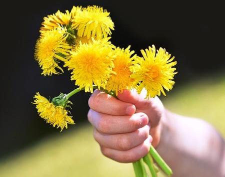 love-dandelion