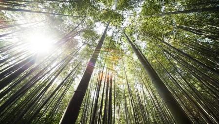 bamboo-364112_960_720