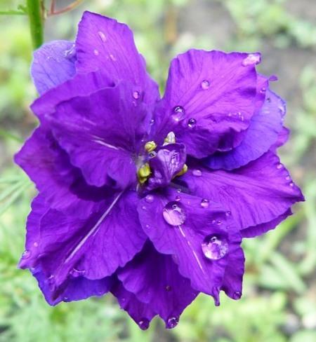 flowers-274331_960_720-1