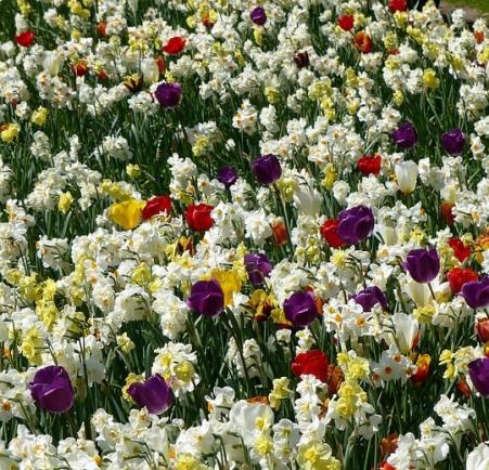 flowers-1376142_960_720
