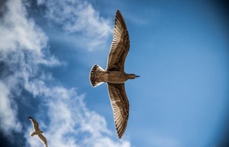 sea-gull-765490_960_720