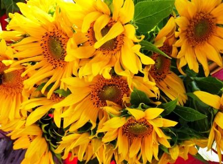 sun-flower-1700540_960_720