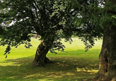 tree-1633577_960_720