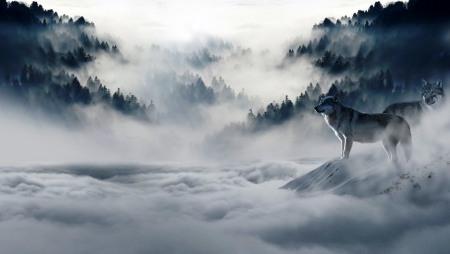 wolf-1341881_960_720