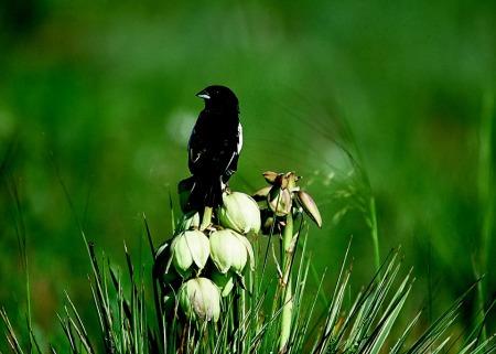 bird-591550_960_720