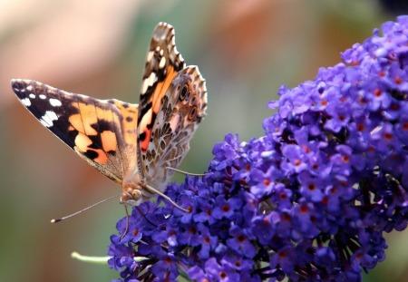 butterfly-1542925_960_720