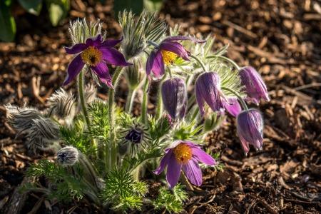 flower-1971524_960_720
