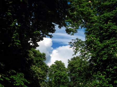 tree-220664_960_720