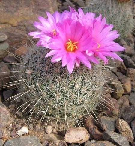 cactus-2117_960_720