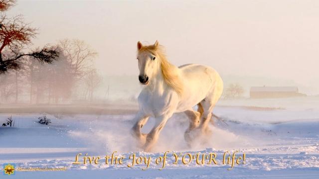 live the joy.001