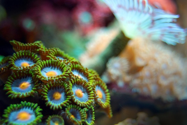 coral-2717231_960_720