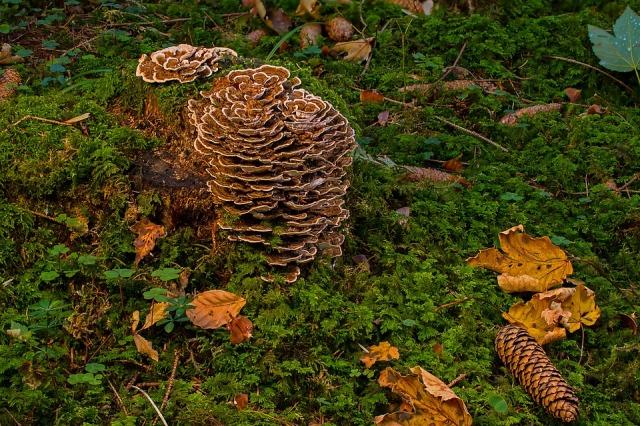 mushroom-3698199_960_720