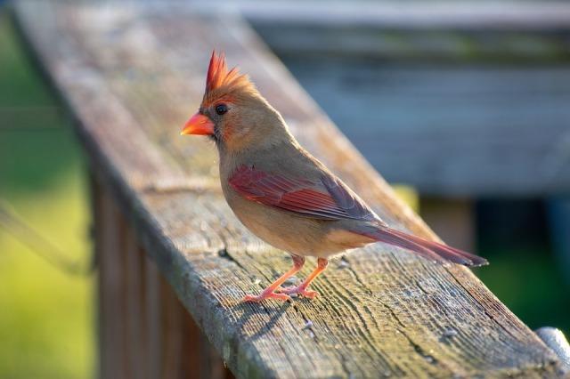 bird-3979968_960_720
