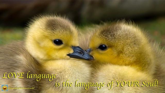 love language.001