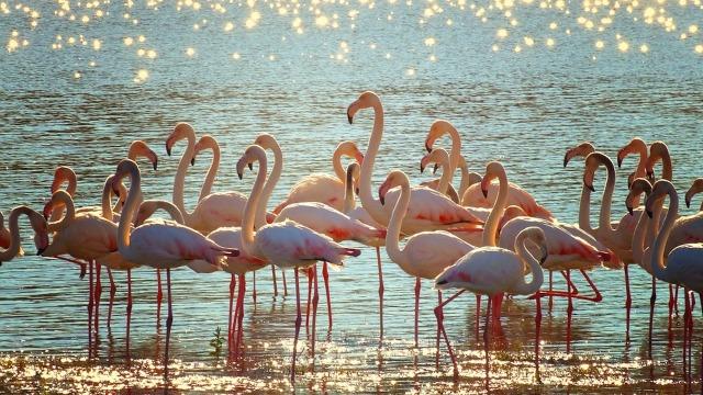 flamingos-3718480_960_720